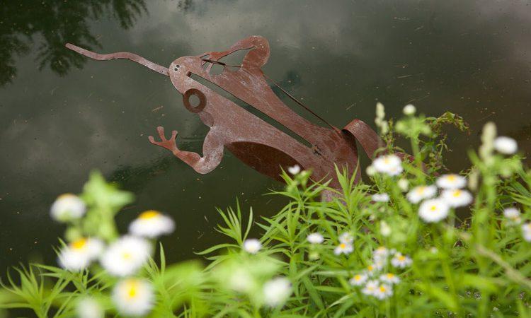 Schuman_frog_1810